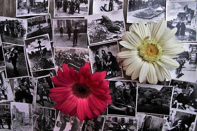 czarno-białe zdjęcia wojenne idwa gerbery -biały iczerwony