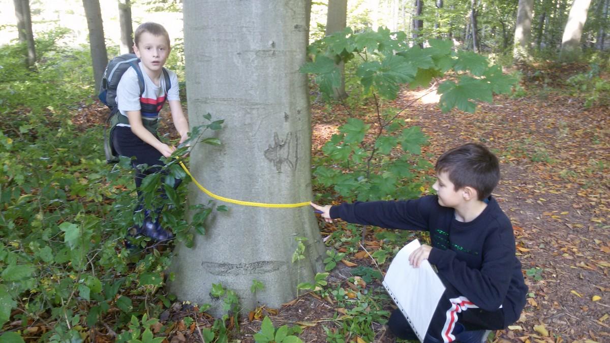 chlopcy-mierza-obwod-drzewa